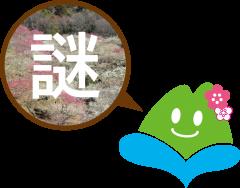 「第48回筑波山梅まつり」筑波山地域ジオパークイベント開催のお知らせ