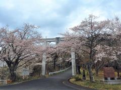 【変更】3/27-5/9|あたご山桜まつり