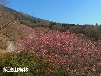 『6 筑波山南麓01-写真-』の画像