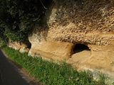 『崎浜のカキ化石床』の画像