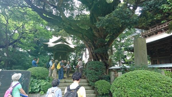 『『スダジイ(椎の木)ジオツアー』の画像』の画像